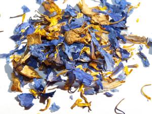 blue-lotus2_best_800